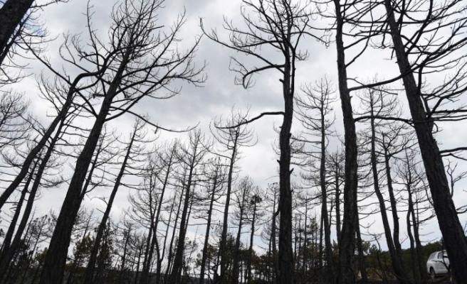 Eskişehir'deki orman yangınında son durum