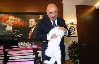 İşitme engelli Ankara kedisi Başkan Altınok'un...