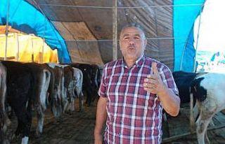 Kurban pazarında türkü sesleri yükseliyor