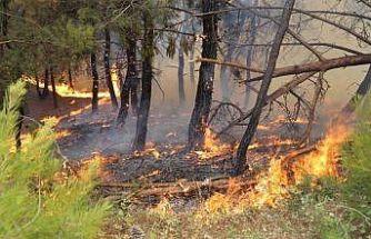 İzmir'deki oda, borsa ve birliklerden orman yangını sonrası büyük kampanya