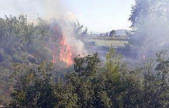 Antalya'da çıkan yangın kontrol altına alındı