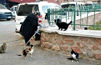 Sokak kedilerini her gün pişmiş tavuklarla besliyor