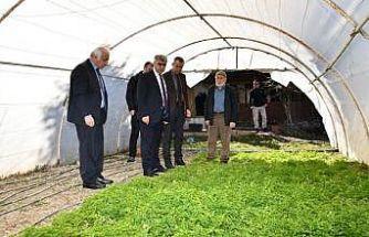 Vali Gürel'den örtü altı üreticilerine ziyaret